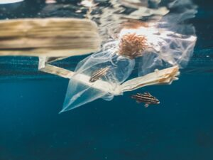 plastic is abound in our oceans