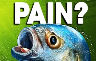 seaspiracy-revisited-do-fish-feel-anything